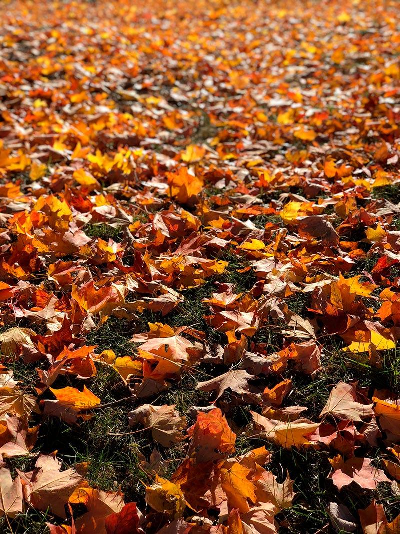 Acupuntura para el otoño